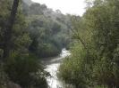 Río Segura a su paso por la Vega Media